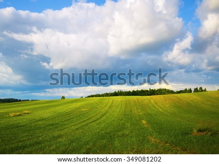 Field of green grass and blue sky. Rural landscape. Sunny day in the countryside. - stock photo