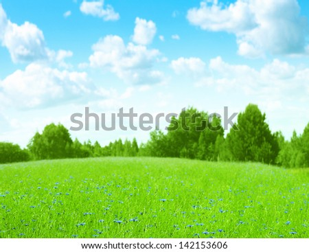 Field of green grass and bright blue sky.