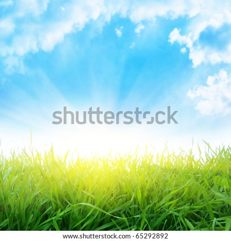 Field of green grass and sunlight. - stock photo