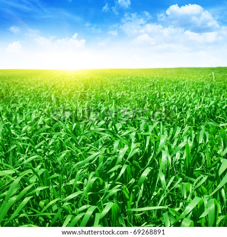 Field of green grass ,blue sky and sun. - stock photo