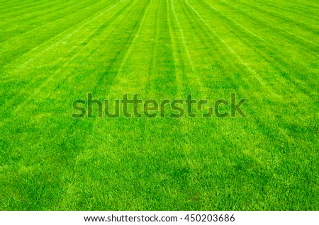 Field of green grass in the summer, background