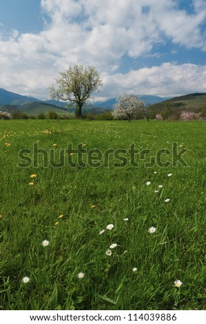 field of green grass, marguerite, tree and cloud sky - stock photo