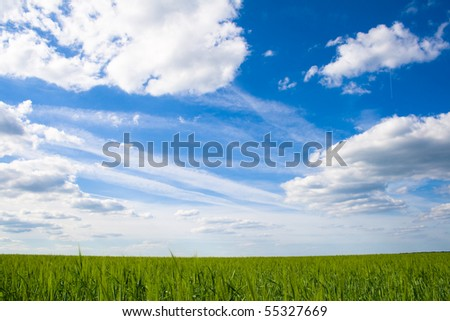 Field of green grass on a background
