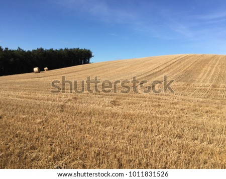 Field of Hay in front of Blue Sky