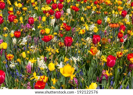 Field of multiple colored flowers - stock photo