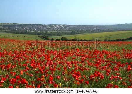 Field of Poppies on Ditchling Beacon outside Brighton in England - stock photo