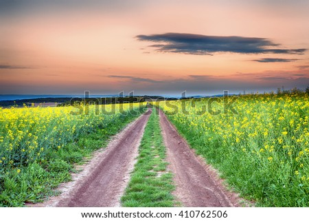 Field of rapeseed (brassica napus) with rural road - plant for green energy and green industry - stock photo