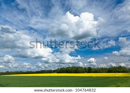 Field of rapeseeds over dramatic blue sky. - stock photo