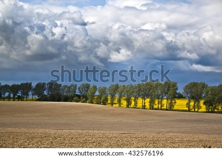 Field of rapeseeds over dramatic blue sky.