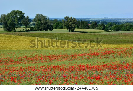 field of red poppy and blue flowers - stock photo