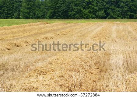 Field of residues grain - stock photo