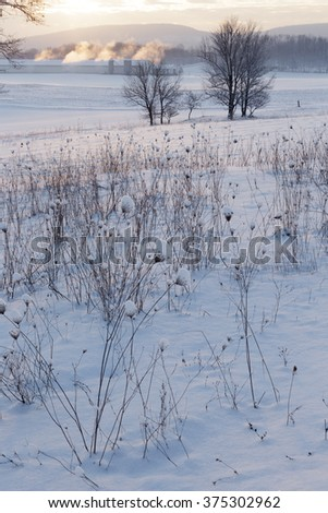Field of snow covered weeds.