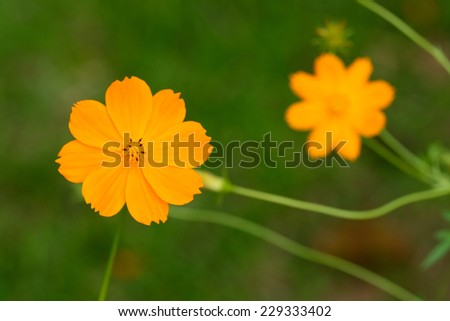 Field of spring flowers and perfect sunny day - stock photo