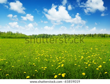 field of spring flowers and sunny day - stock photo