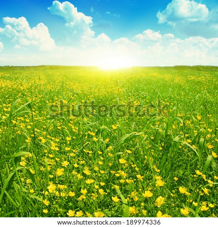 Field of spring flowers,blue sky with clouds and sun. - stock photo