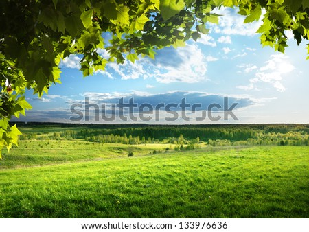 field of spring grass and forest - stock photo