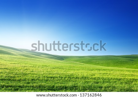 field of spring grass and sunny day