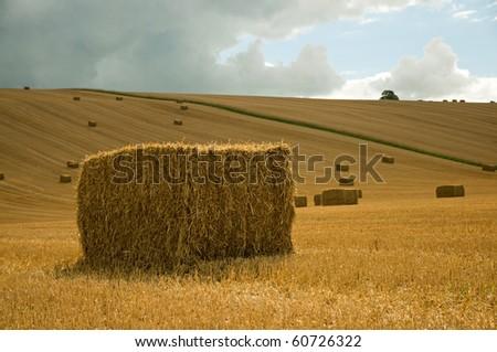 field of straw bales - stock photo