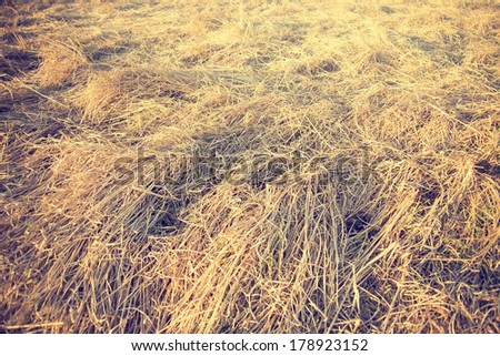 Field of straw in vintage tone - stock photo