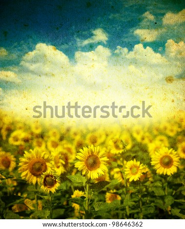 Field of sunflowers on a grunge background - stock photo