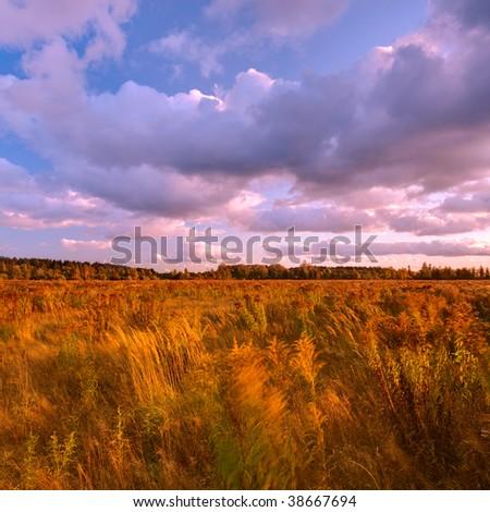 Field of tall grass - stock photo