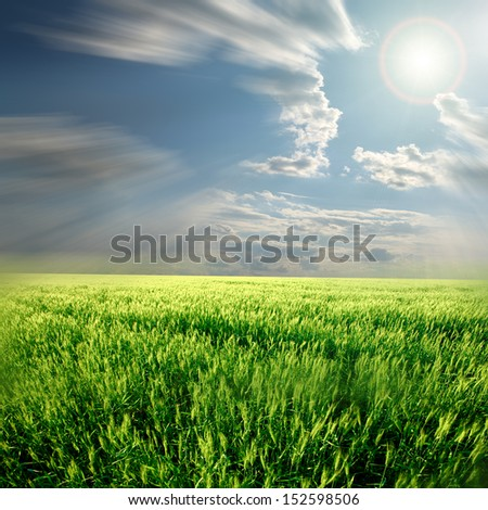 Field of wheat and cloud in the sky  - stock photo