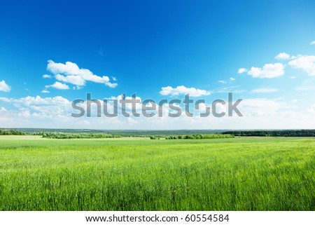 field of wheat and sunny day - stock photo