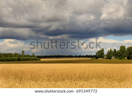 Field of wheat - countryside view