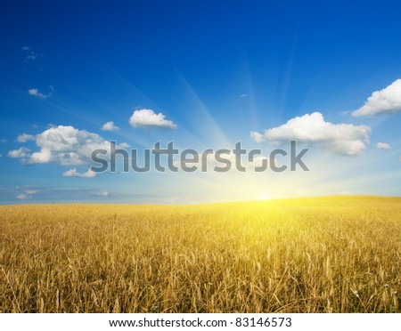 field of wheat. Nature composition. - stock photo