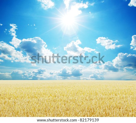Field of wheat over blue sky