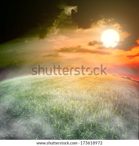 Field of wheat with morning fog  - stock photo