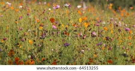 Field of wild flowers - stock photo