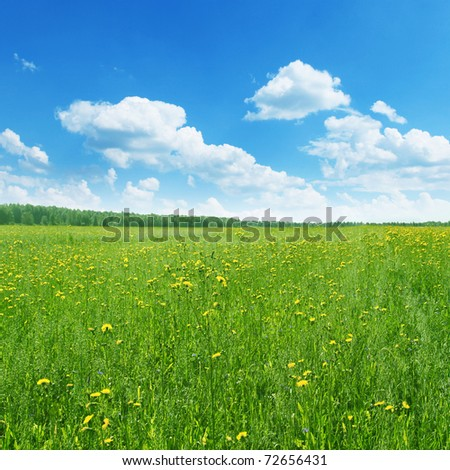 Field of wildflowers in summertime. - stock photo