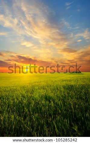 field of yellow grass against cloudy sky - stock photo