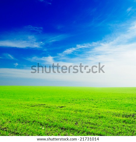 field on a background of the blue sky and white clouds