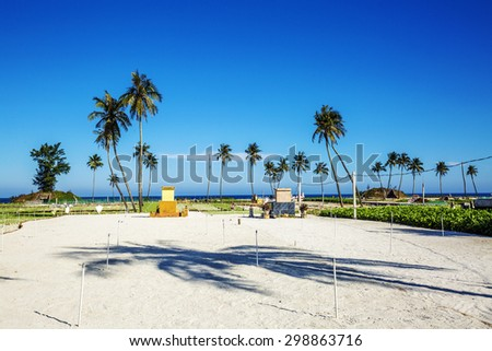 field on sand of onions and garlic soy  in Ly Son island, Vietnam - stock photo