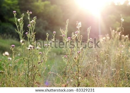 Field plants in the sunlight - stock photo