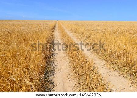 Field road of ripe grain - stock photo