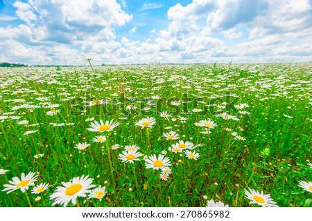field strewn with daisies and blue sky - stock photo
