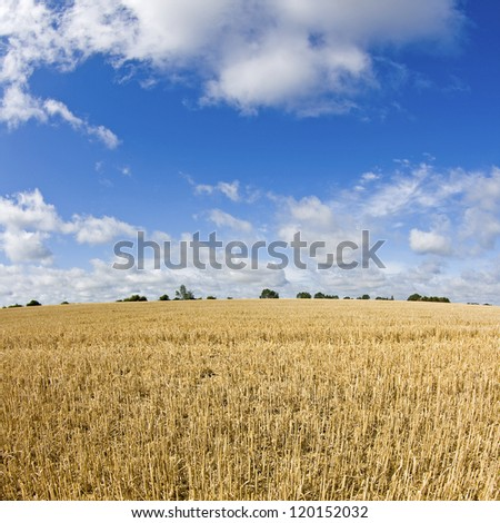 Field, stubble field after harvest.