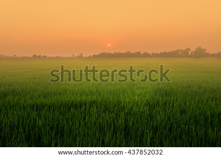 field, sunset and sky - stock photo