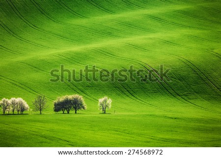 Field waves with blossoming trees in the spring, South Moravia, Czech Republic - stock photo