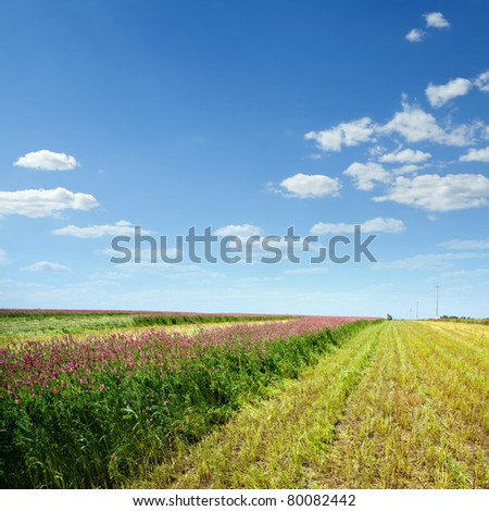 Field with beveled lavndoy against the blue sky - stock photo