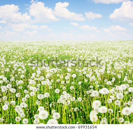 Field with blooming dandelions and blue sky with clouds - stock photo