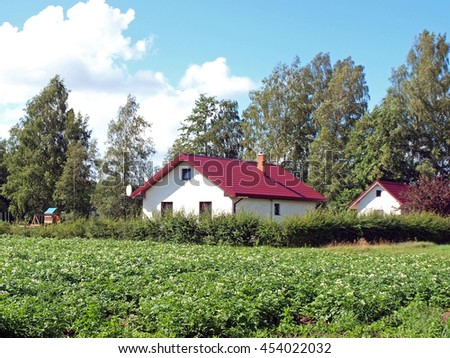 Field with blossoming potatoes near forest and small country farm. - stock photo