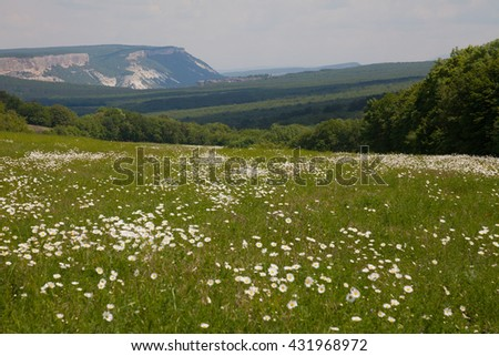 field with daisies - stock photo