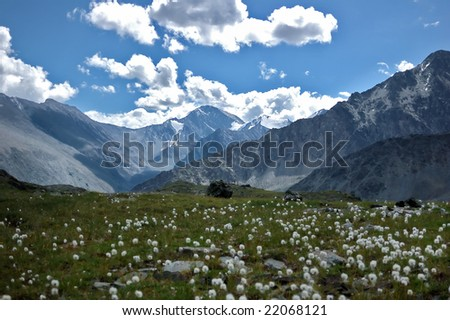 Field with dandelions against mountains of Altai