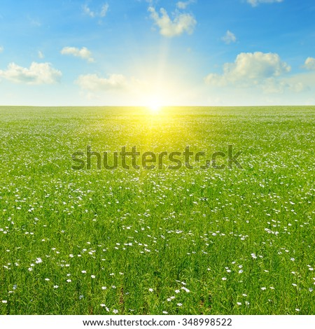 field with flowering flax and blue sky - stock photo