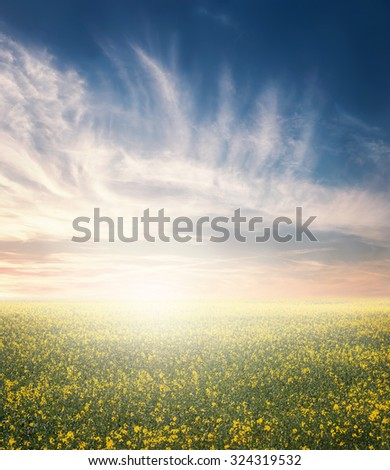 Field with flowers - stock photo