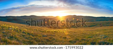 Field with flowers and dramatic colorful sky at sunset - stock photo